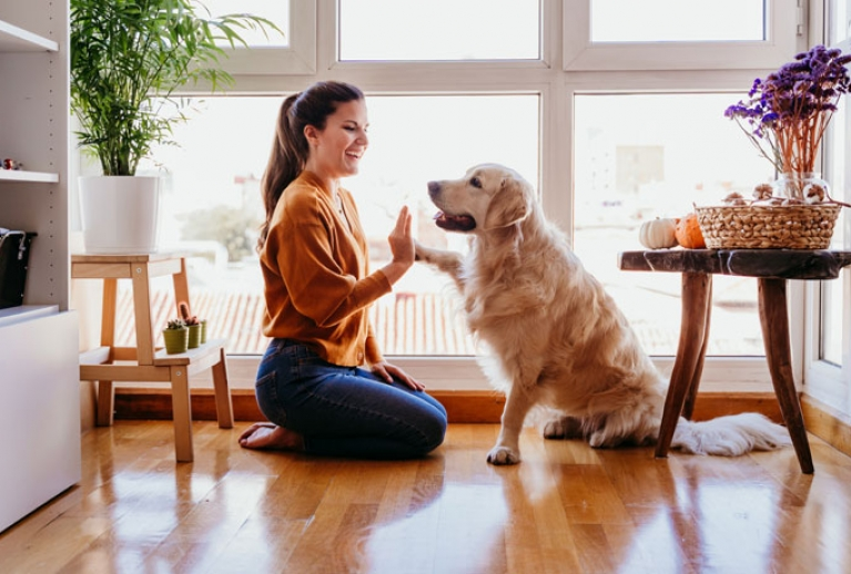 American Cities Are Growing in Popularity with Dog Owners